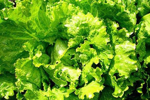 2773-salat-s-kurinoy-pechenyu-5